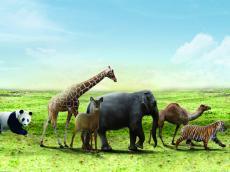 细说雅思听力考试常考10种场景词汇--动物场景