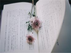 """【SAT学习】趣味学习法之""""读""""——英语原版小说"""