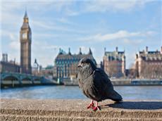 GRE双语阅读每日精选 鸟类数量锐减是天灾还是人为