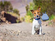 GRE双语趣味阅读 智利流浪犬想去哪就去哪