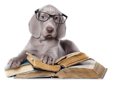 留学生学习小技巧 学术论文怎么读最有效
