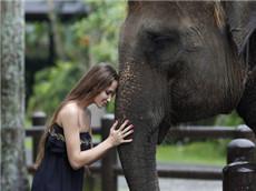 【每日晨读】经济学人GRE双语阅读 法医动物学保护大象刻不容缓