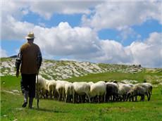 精选经济学人GRE每日双语阅读 英国农场肥羊屡遭窃损失重