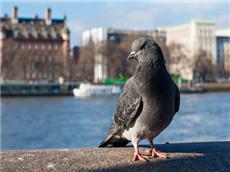 GRE经济学人双语阅读每日精选 鸟类迁徙反映气候变化