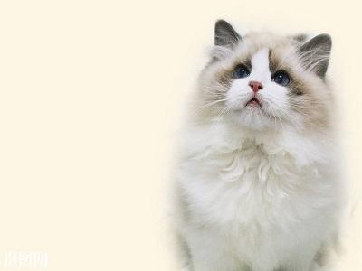 留学生如何养一只猫?国外养猫大全等你来看