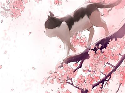 出国留学衣食住行之日本留学绝佳观赏樱花地点介绍