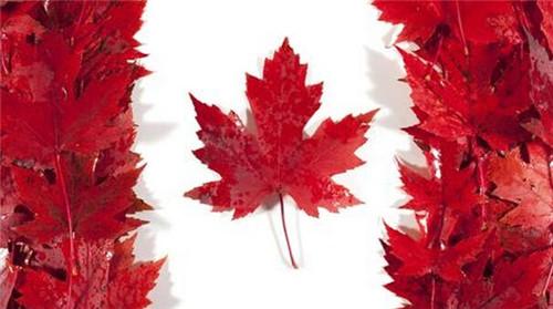 盘点加拿大商科留学10大牛校 确认过眼神是你的梦校