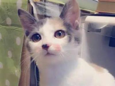 一美国留学生将被遣返 因给猫化妆
