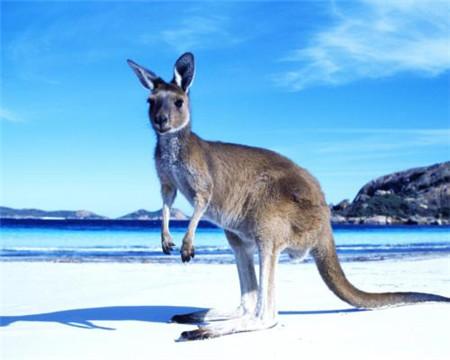 注意了!7月1日澳大利亚签证有重大变革!